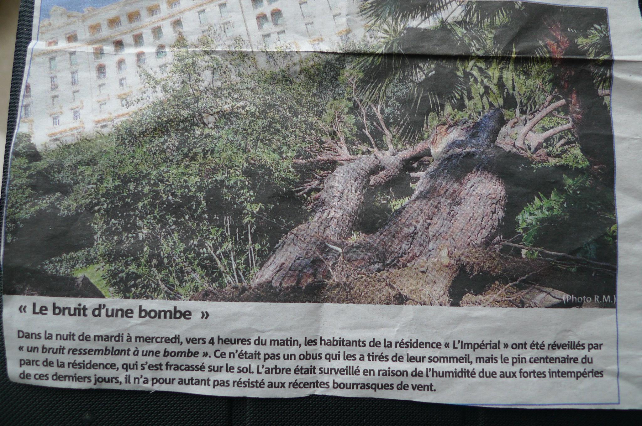 Article de nice matin sur la chute du pin maritime dans le parc de l